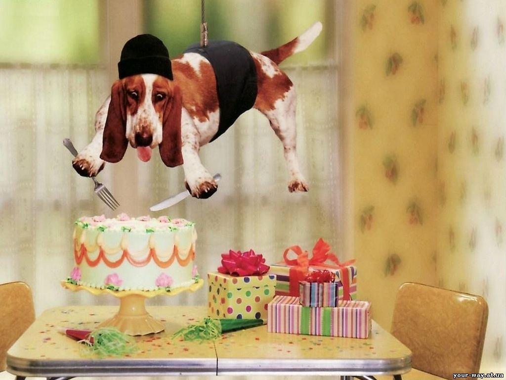 Поздравления от зверей на день рождения